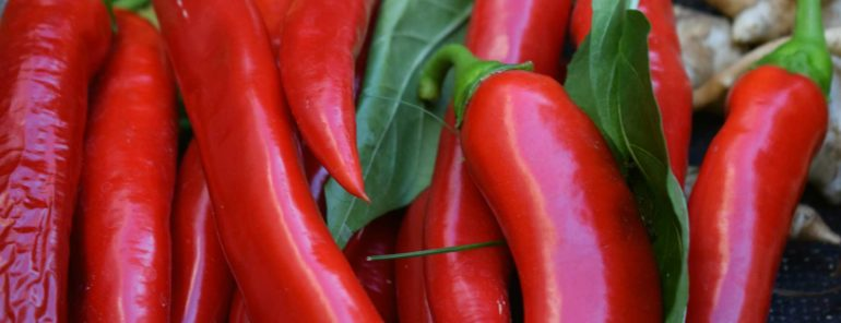 Chili Pepper – A Culinary Experience